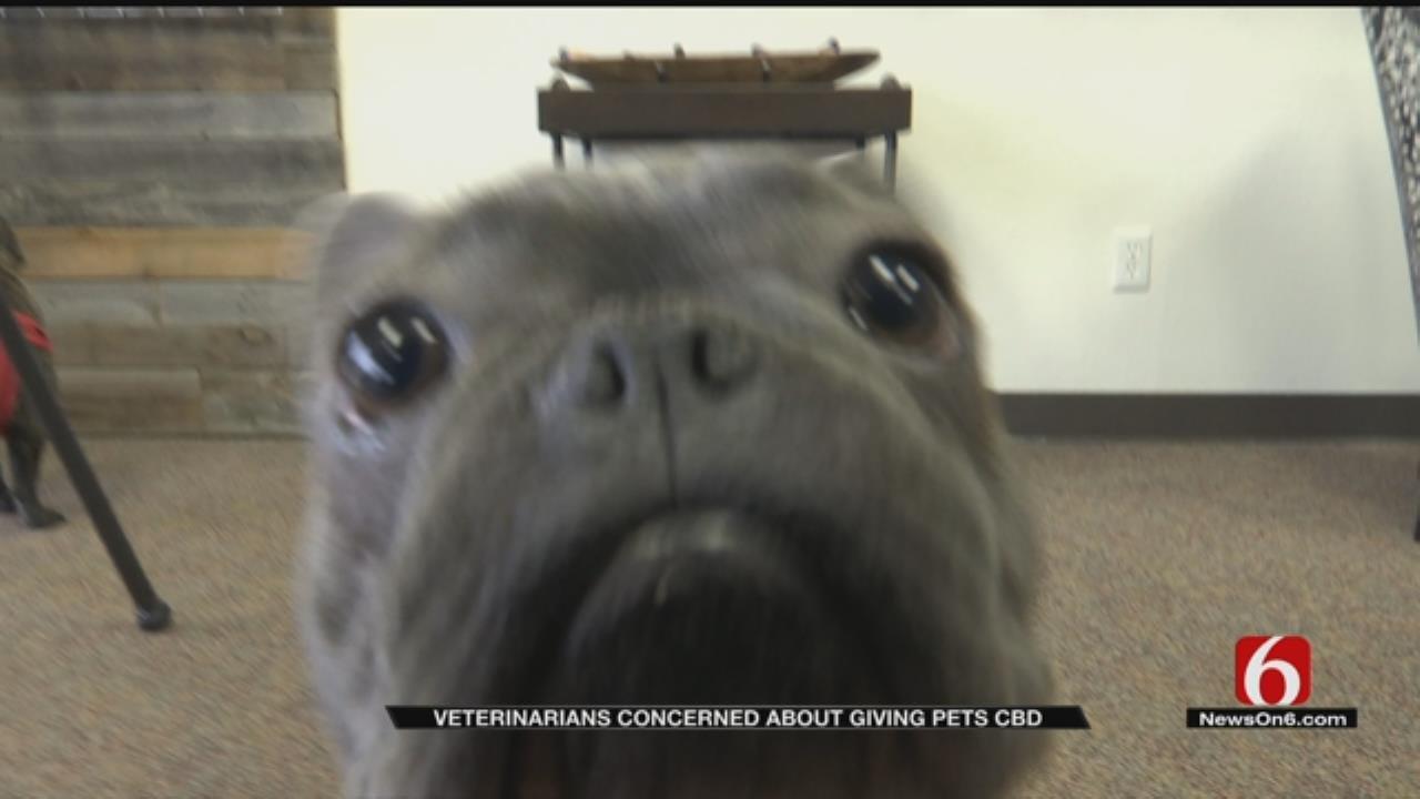 Broken Arrow Vet Cautions Against CBD Pet Treats