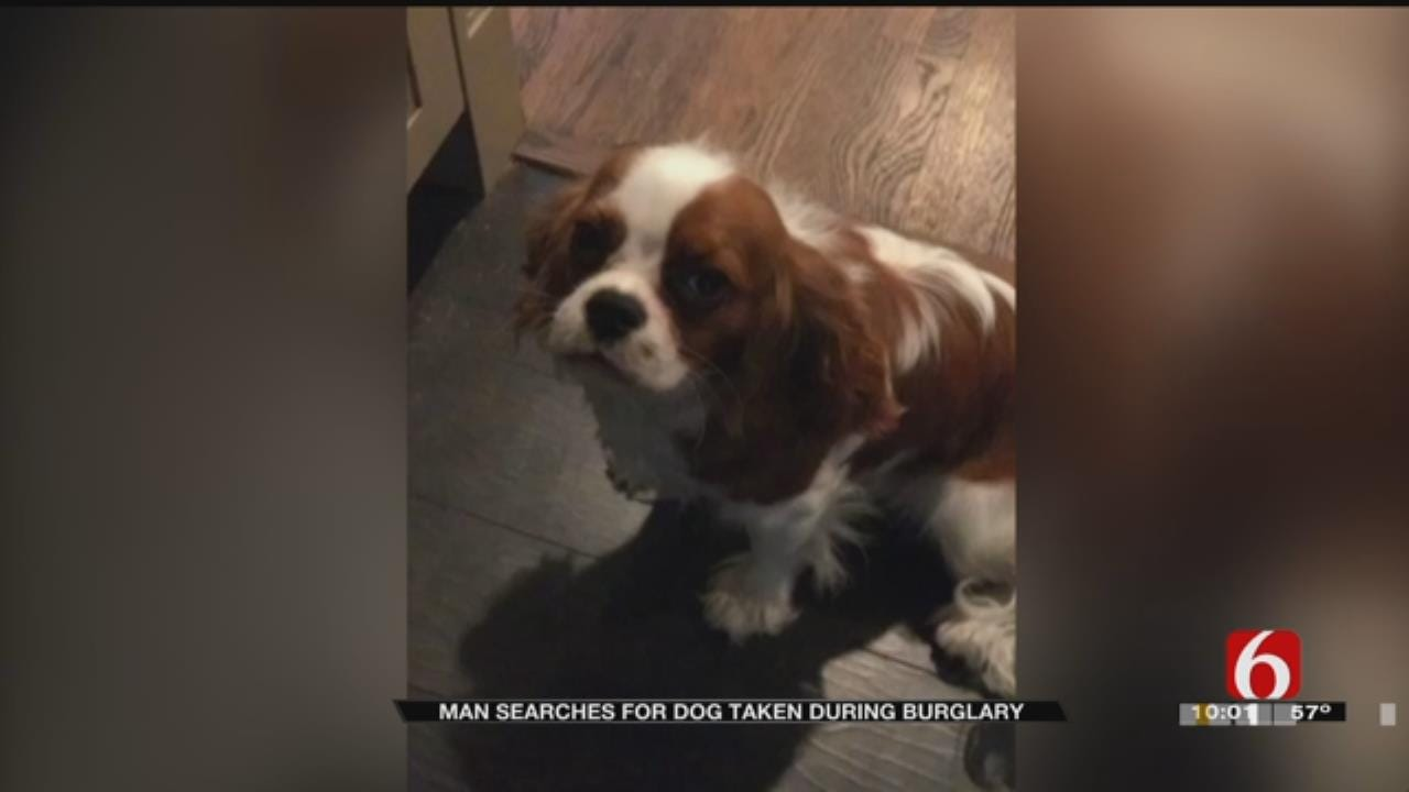 Dog Stolen During Home Burglary In Tulsa