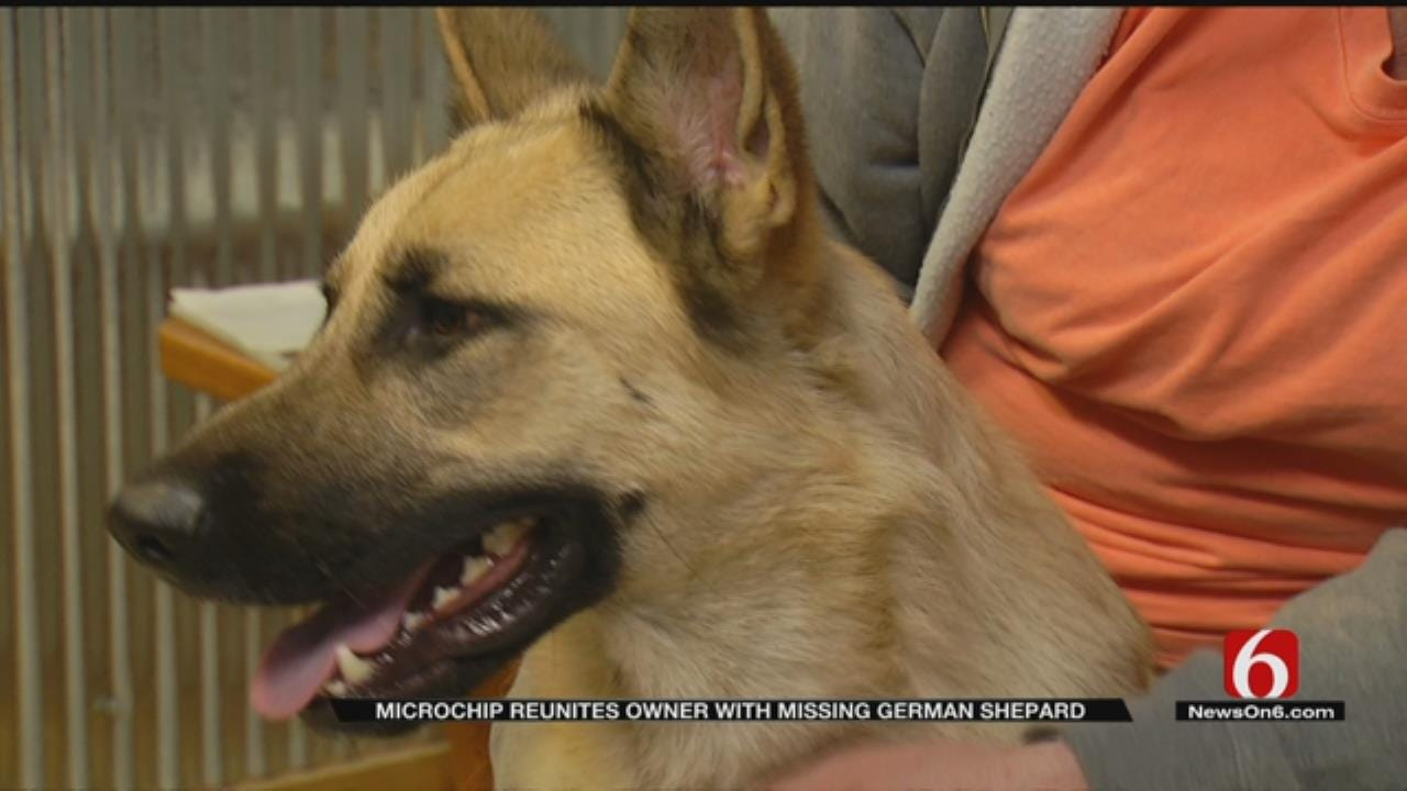Lost Service Dog Reunited With Owner Thanks To Rogers Co. Deputies