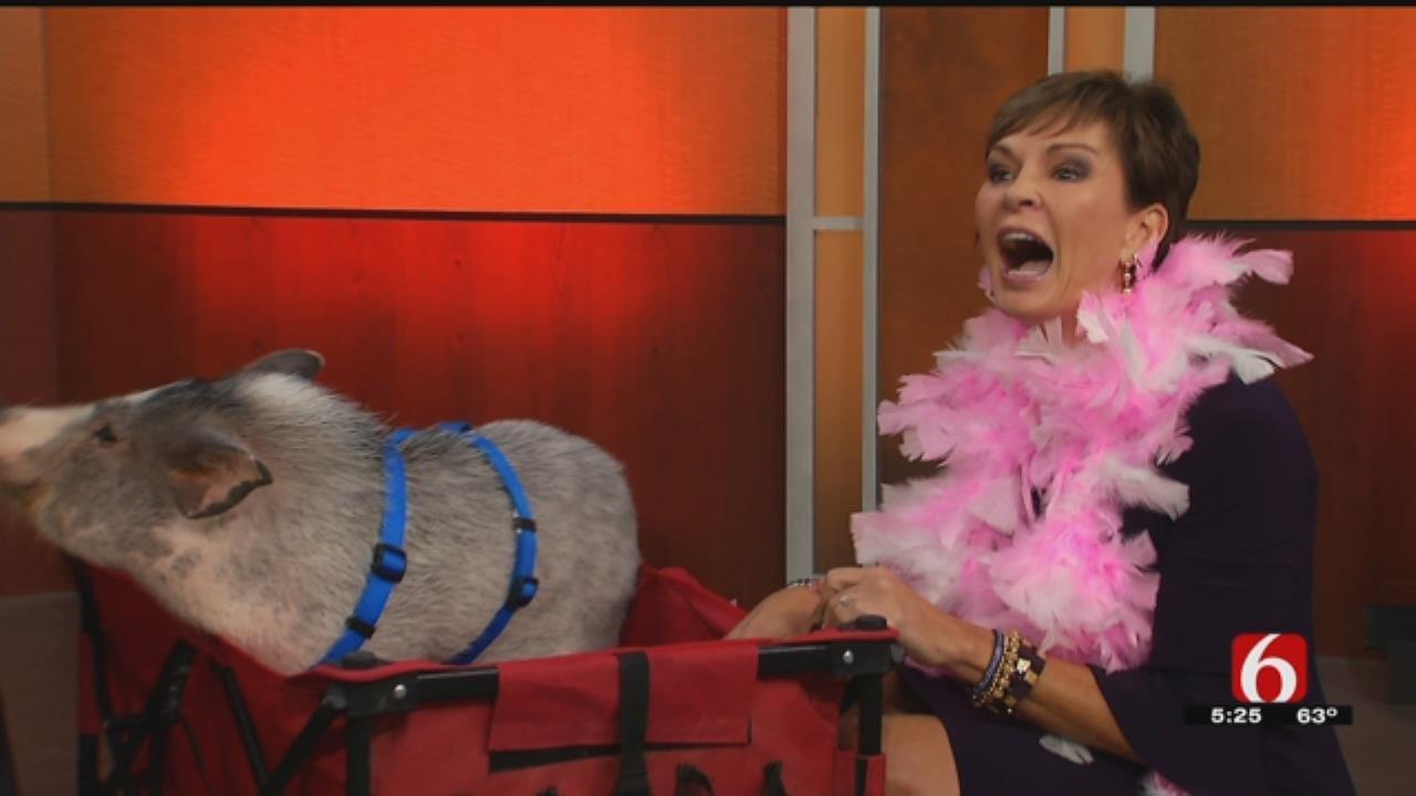 Lori Fullbright Kisses Georgie The Pig In Food For Kids Fundraiser
