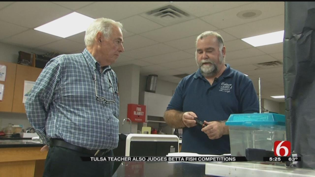 Tulsa Chemistry Teacher Also Certified Betta Fish Judge