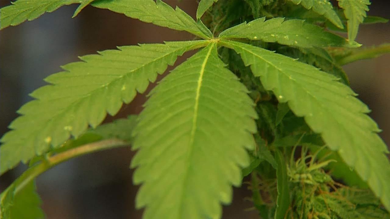 Judge Grants Injunction In Medical Marijuana Lawsuit Against Broken Arrow