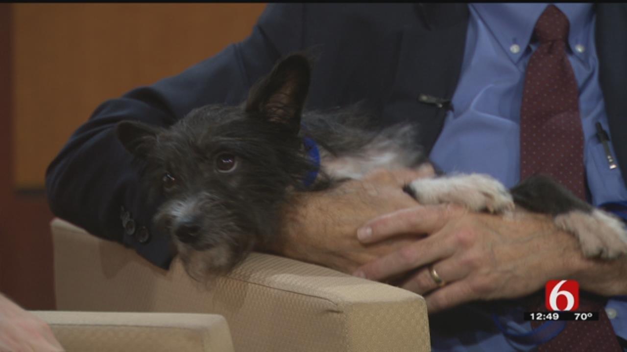 Pet Of The Week: Mambo Visits News On 6 At Noon
