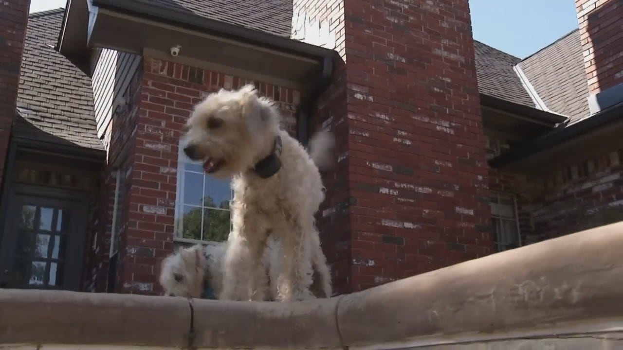 Video Shows Oklahoma Dog Rescuing Dog From Swimming Pool