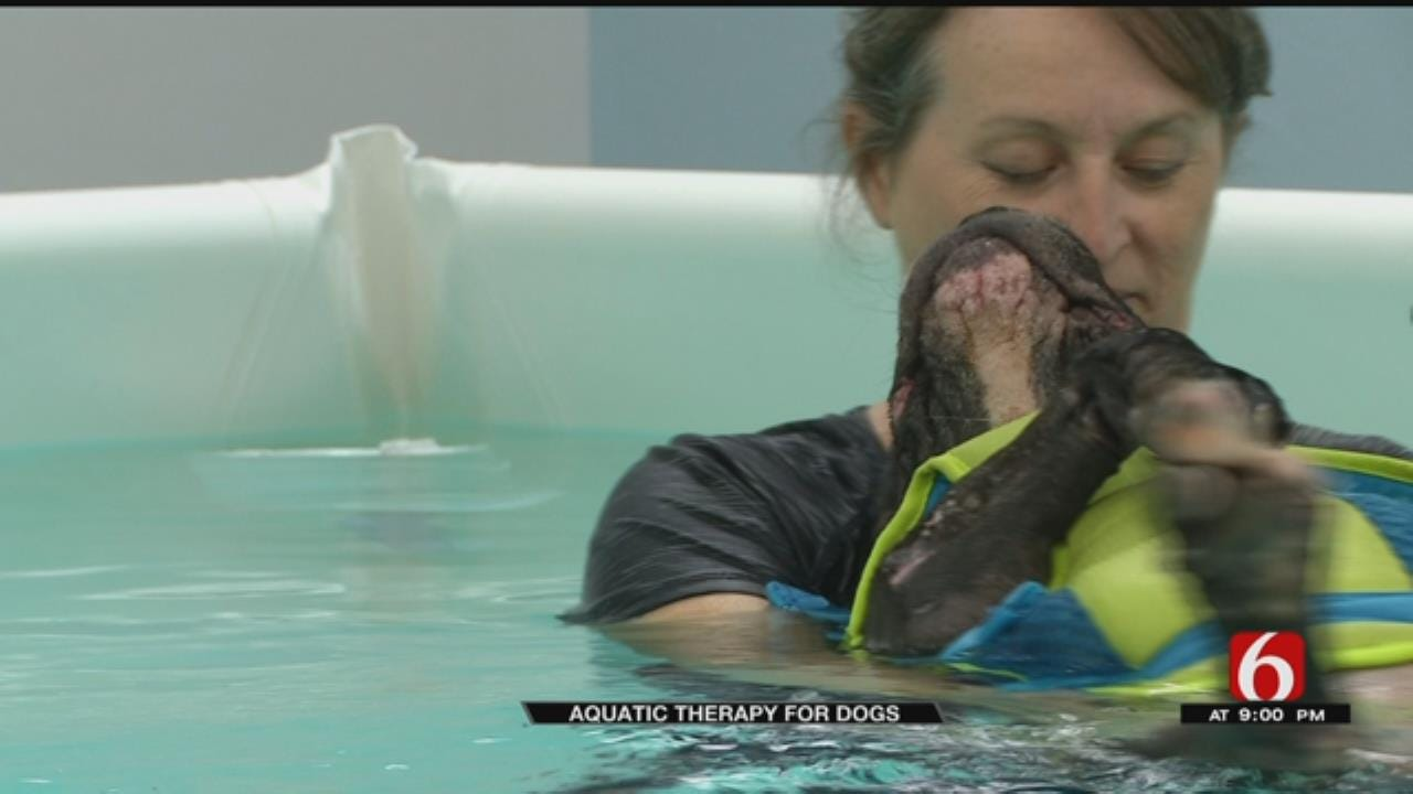 OKC Business Helping Dogs Recover In The Water