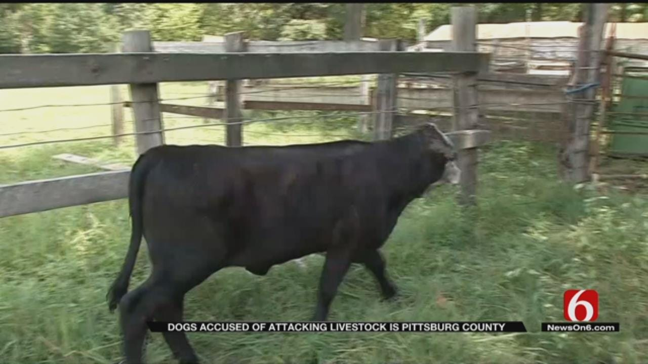 Pittsburg County Ranchers Say Dogs Are Attacking Livestock