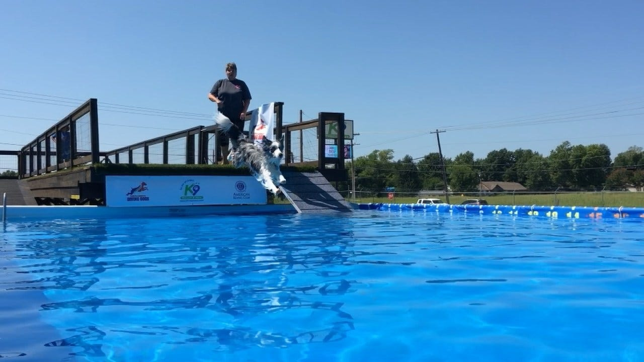 Broken Arrow Dog Dock Diving Competition Set For This Weekend