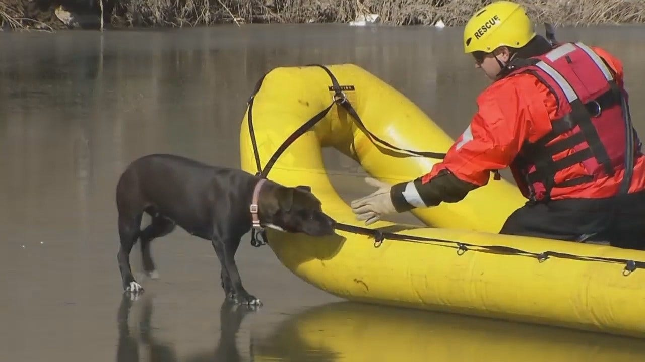 WEB EXTRA: Dog Rescued From Frozen Tulsa Creek