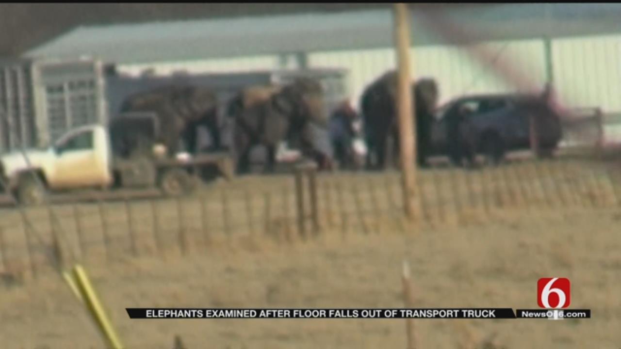 Elephant Transport Stalls Outside Eufaula