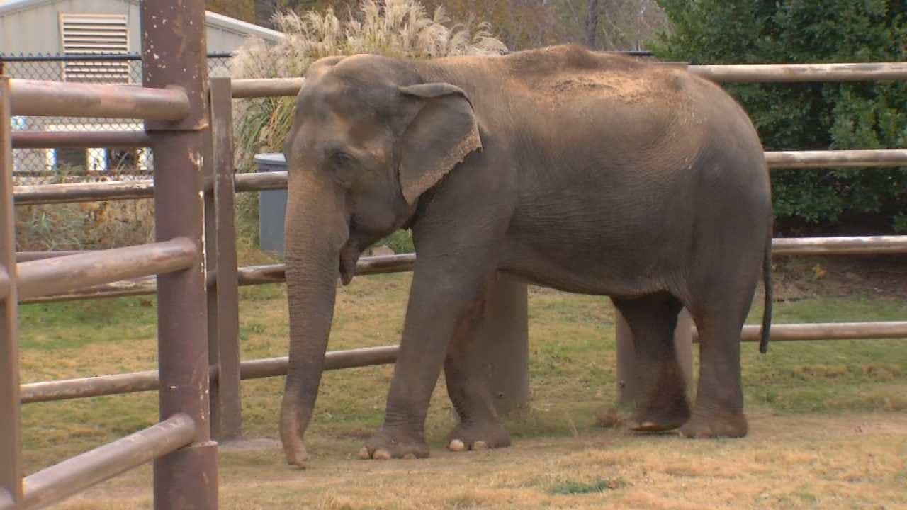 Tulsa Zoo's Oldest Elephant Enters Hospice Care