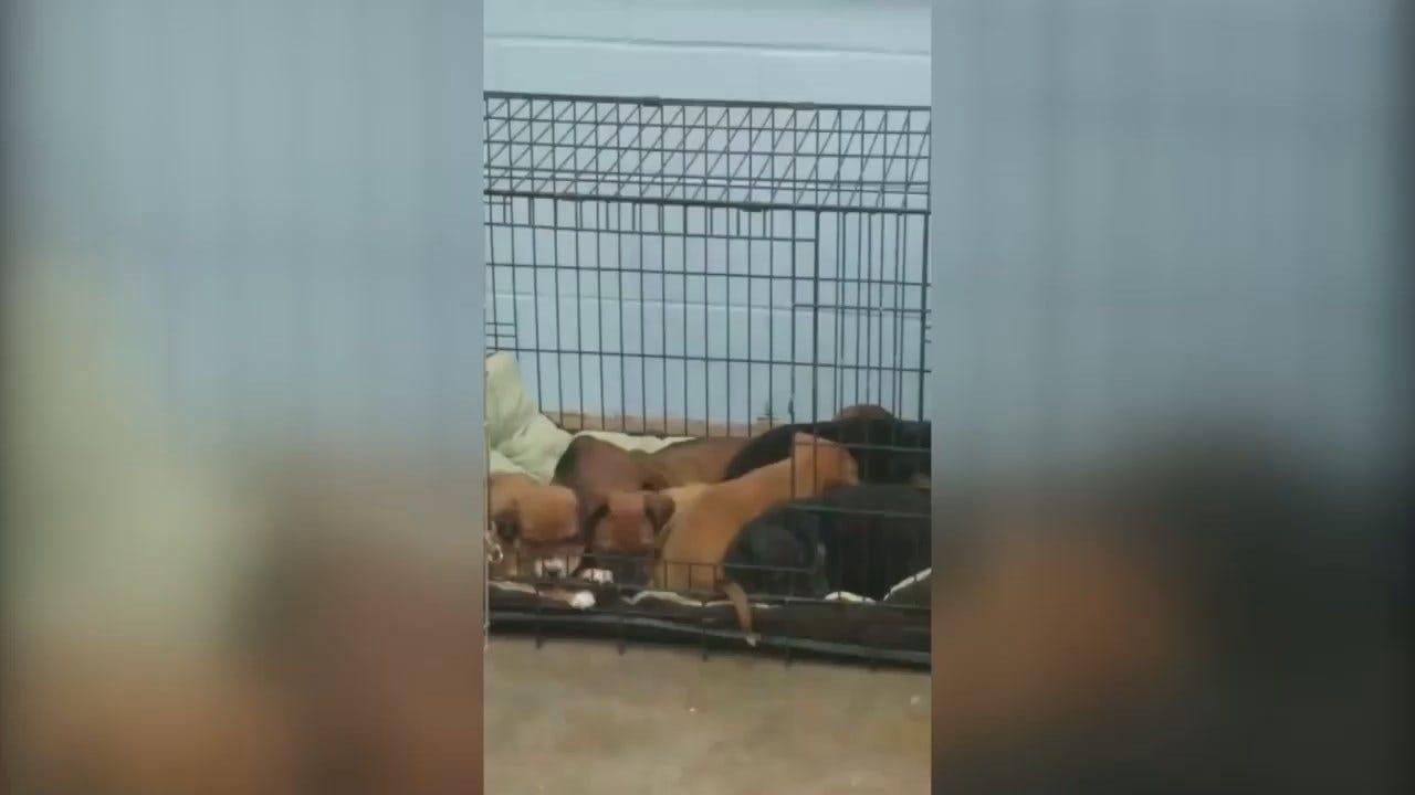 WEB EXTRA: Washington County SPCA Facebook Video