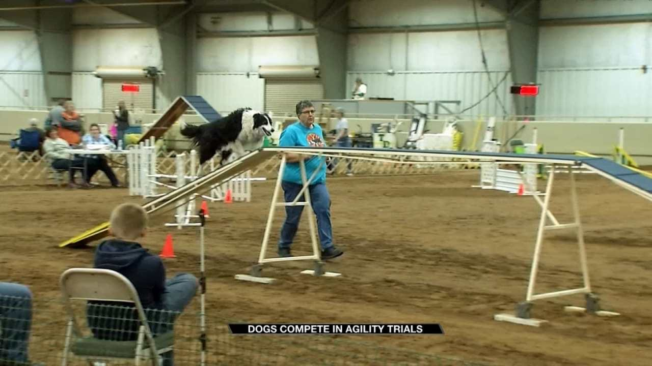 Man's Best Friend In Tulsa For Agility Trials
