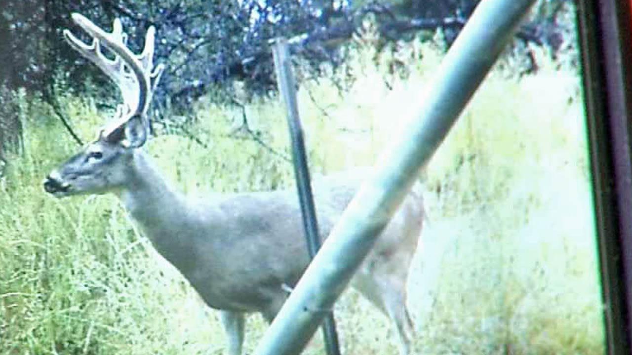 Antlered Doe Shot On Osage County Ranch
