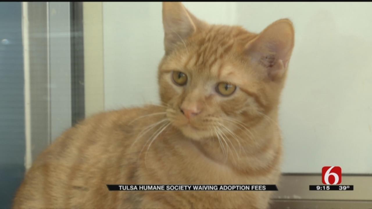 Tulsa Humane Society Waives Adoption Fees For Holidays