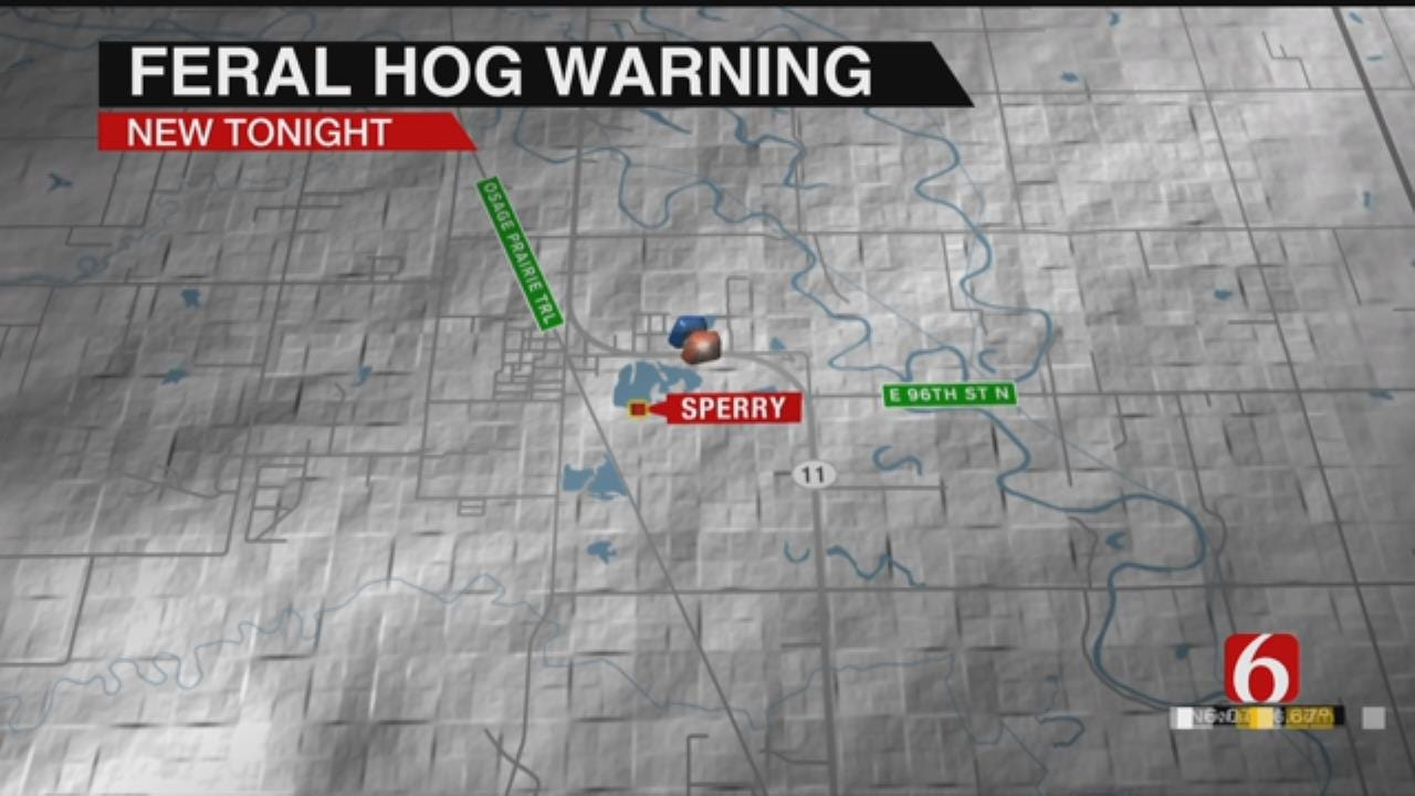 Feral Hogs Pester Sperry
