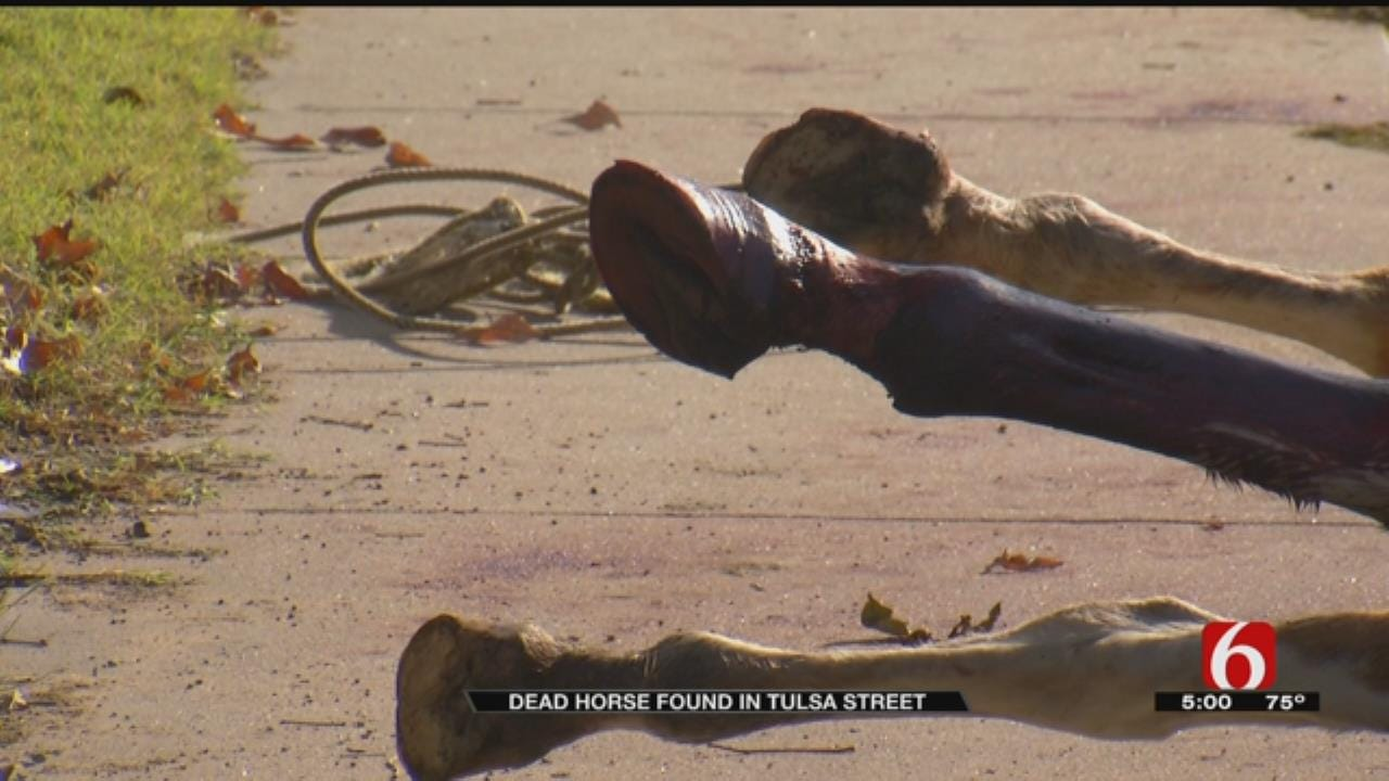 Death Of Horse Being Investigated By Tulsa Police
