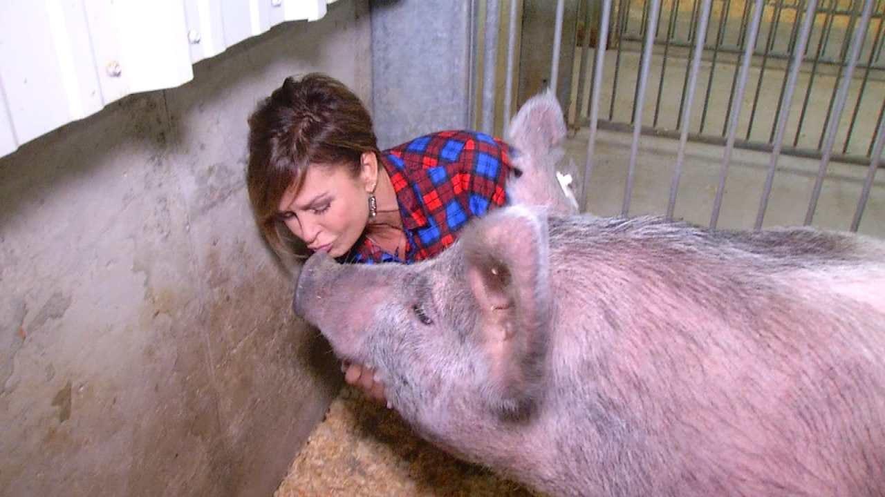 Lori Fullbright Kisses 'Blue' The Pig