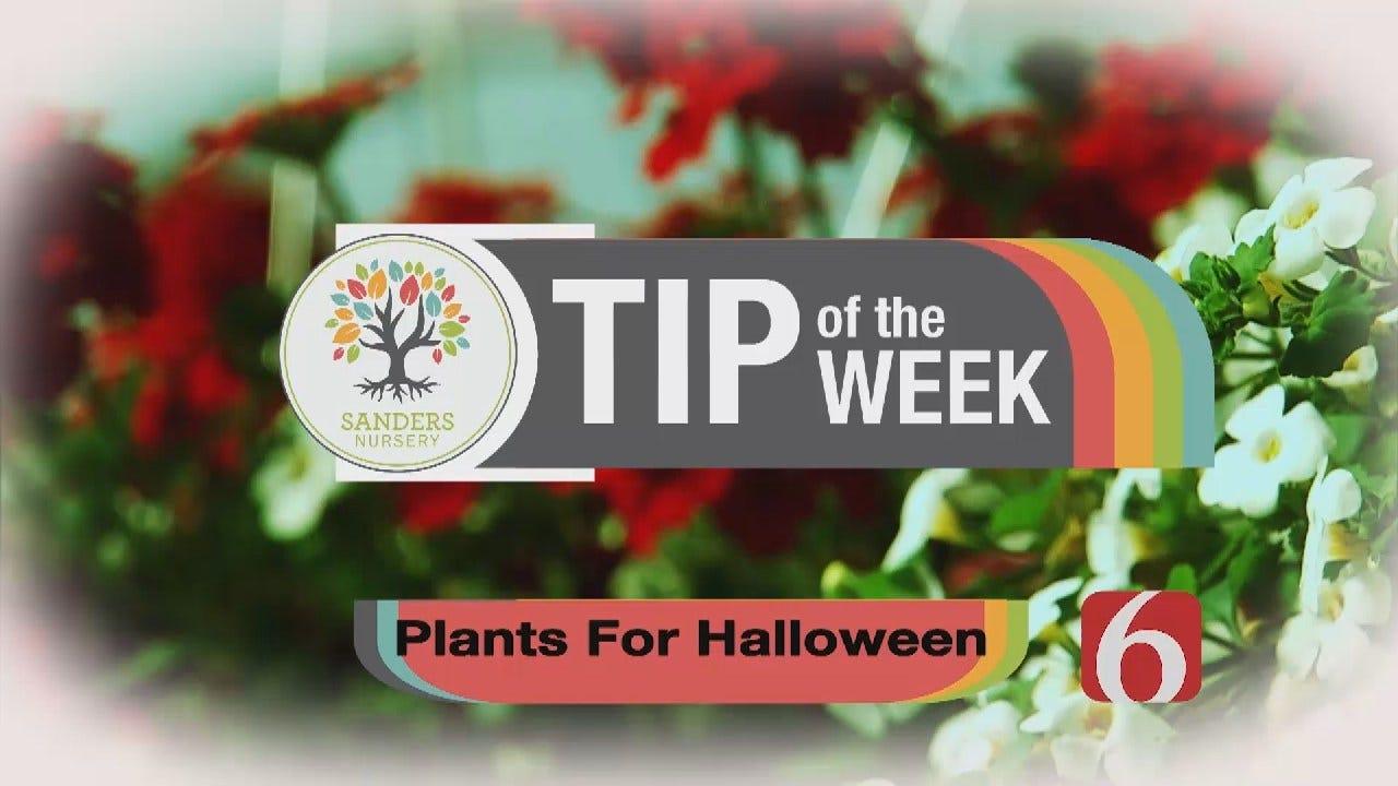 Tip of the Week 24