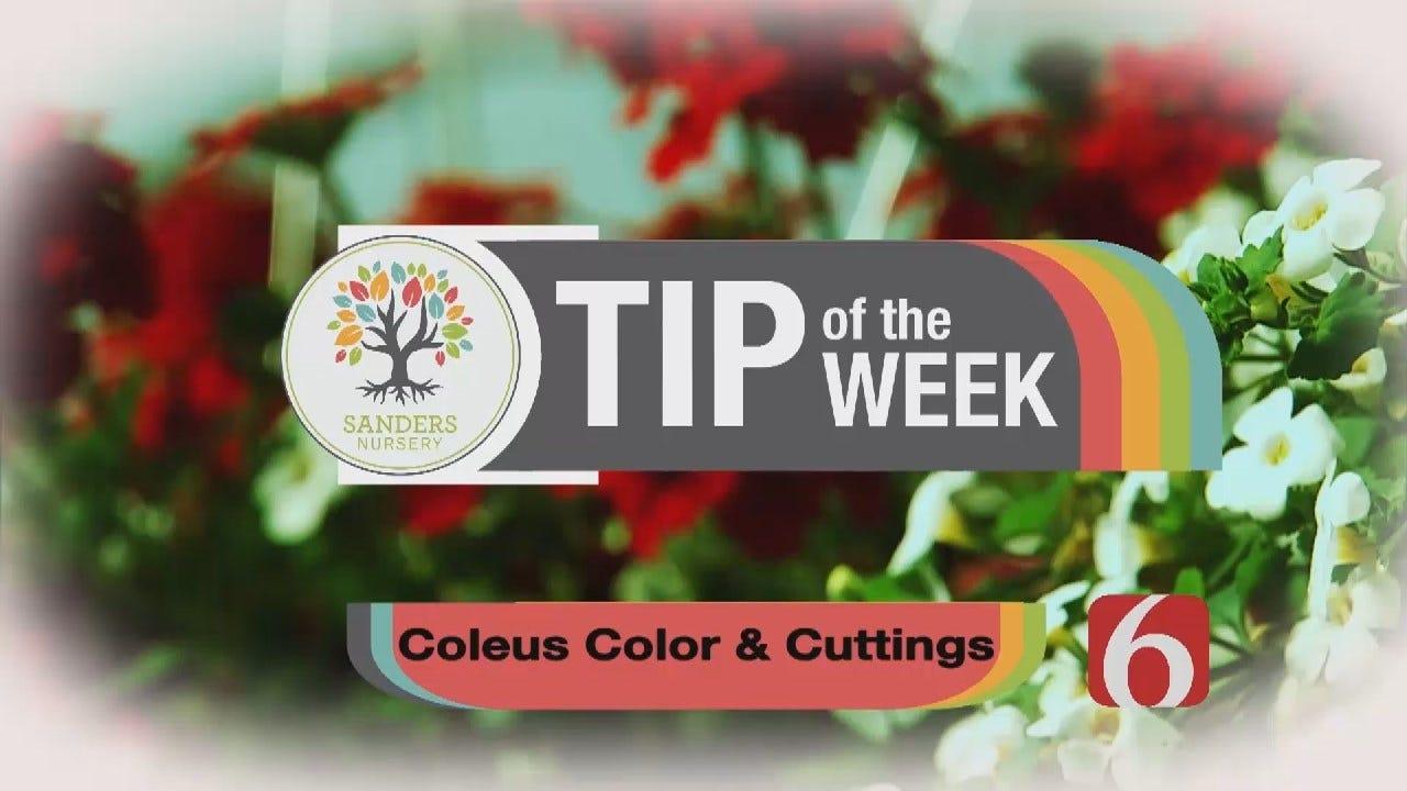 Tip of the Week 21