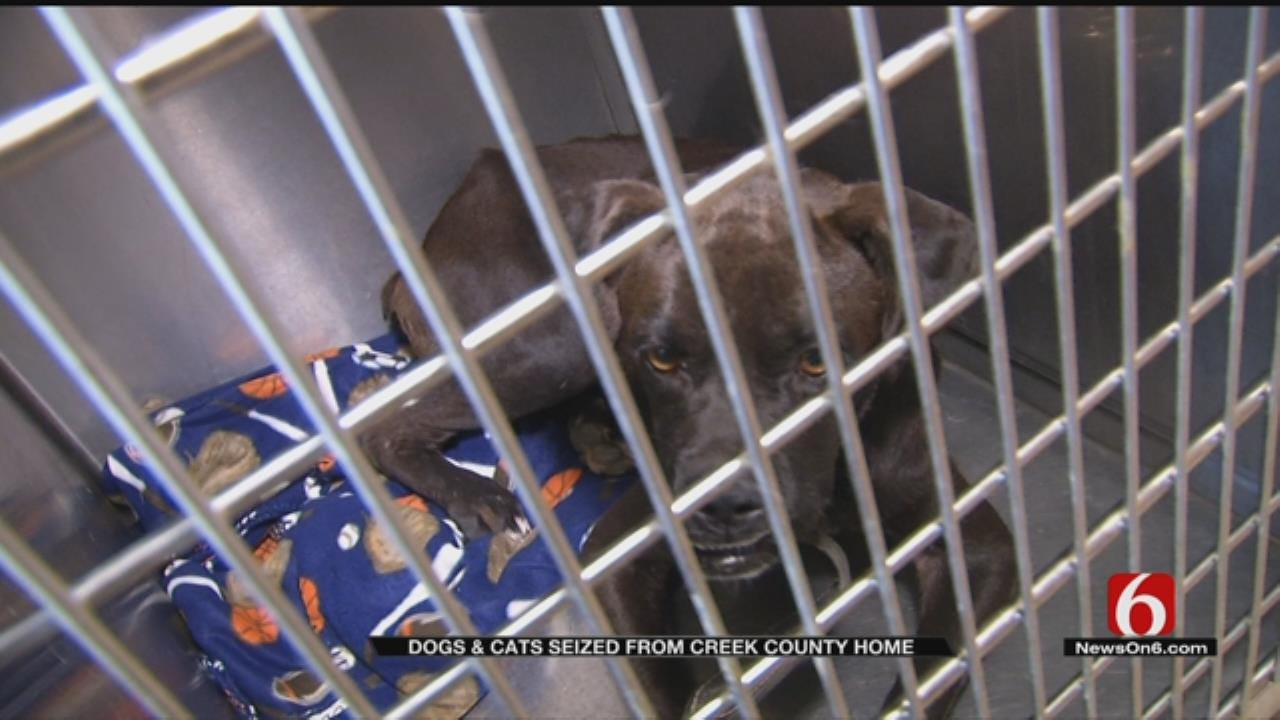 Dogs, Cats Seized From Creek County Home For Second Time