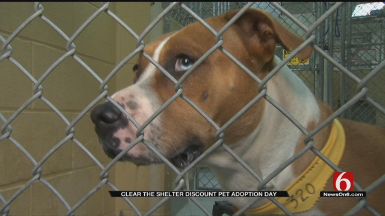 Hundreds Of Dogs, Cats Adopted At Tulsa Clear The Shelters Event