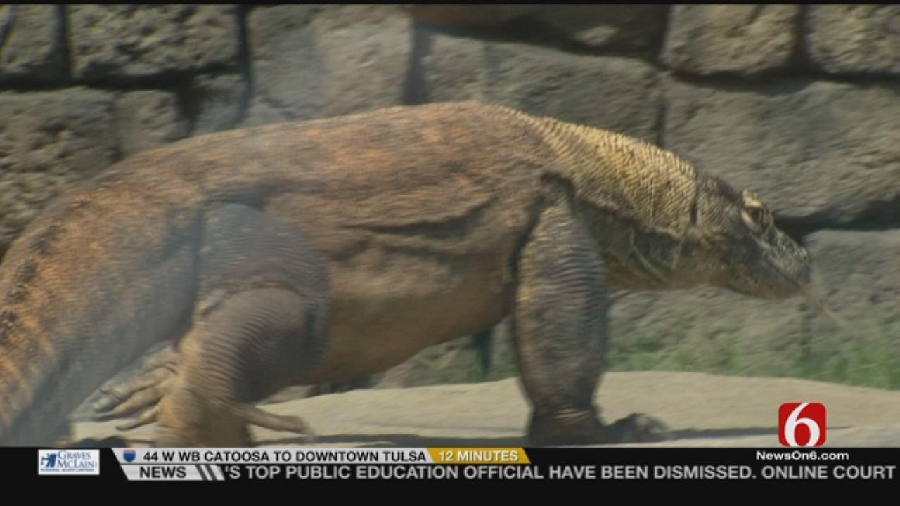 Wild Wednesday: Tulsa Zoo's Komodo Dragon Exhibit
