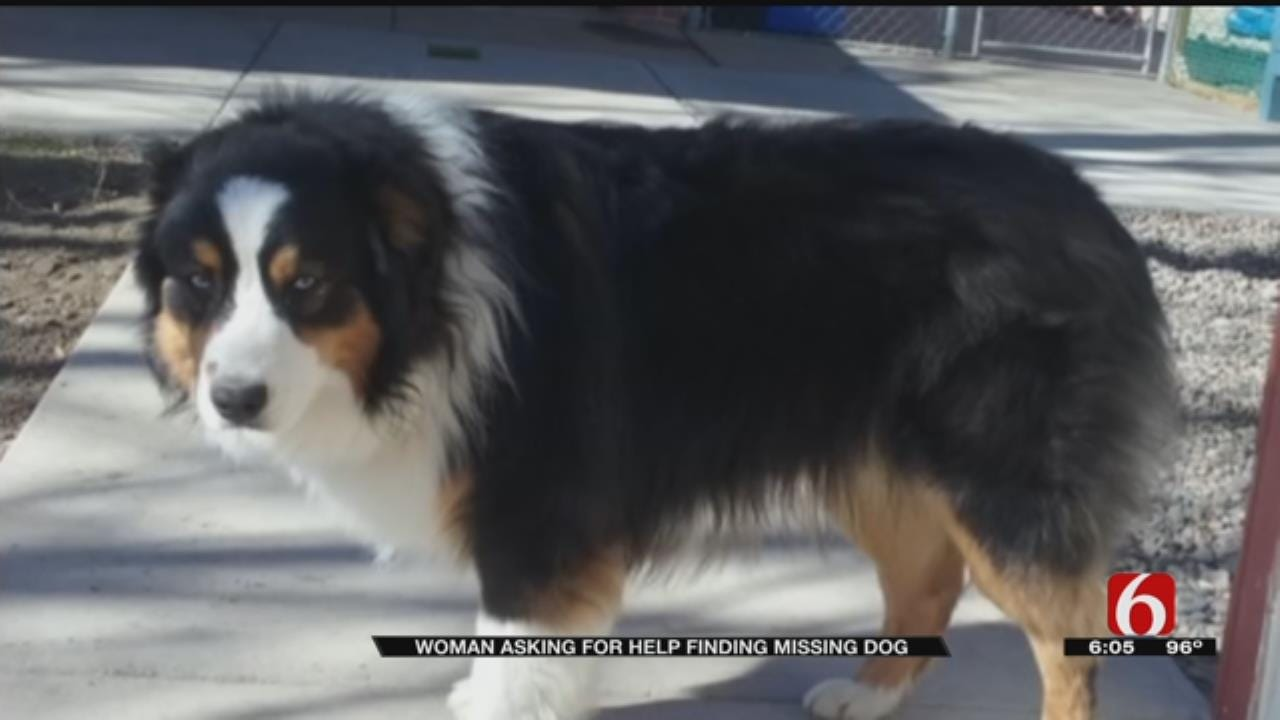 Green Country Family Wants Stolen Dog Back