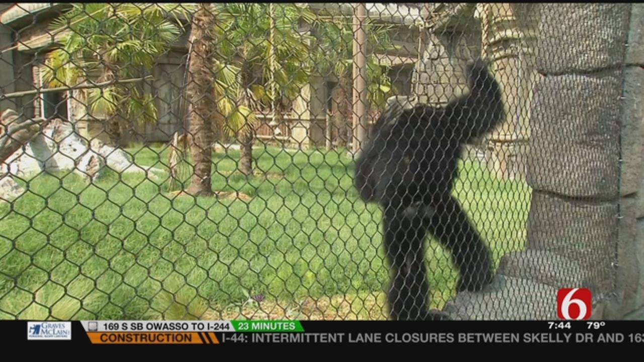 Wild Wednesday: Siamangs At The Tulsa Zoo's Lost Kingdom Exhibit