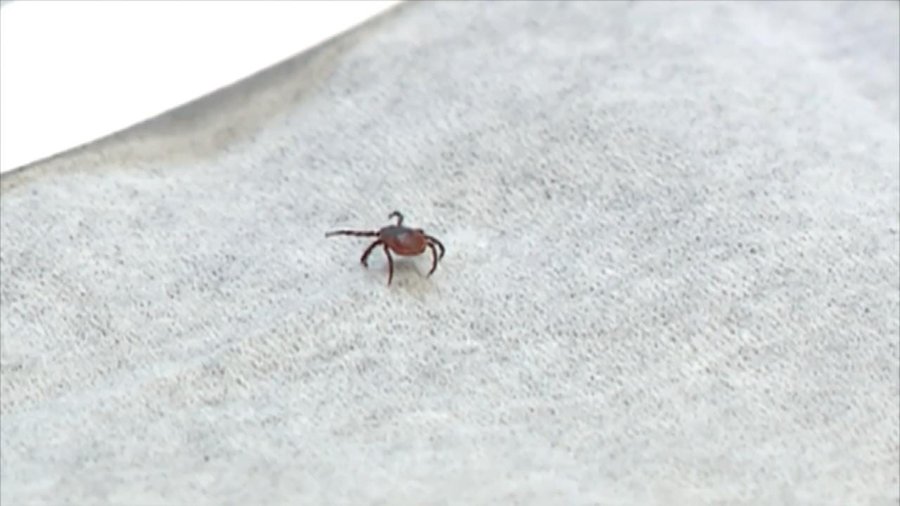 Medical Minute: Tick Protection Tips