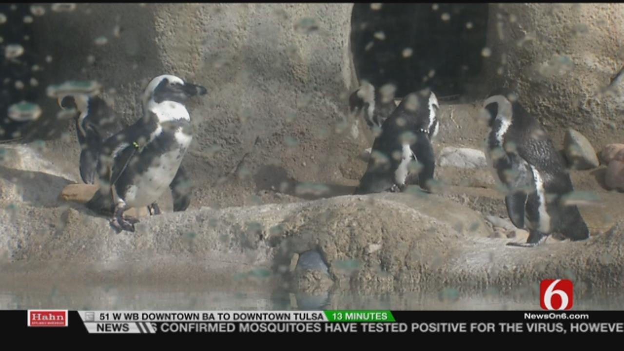 Wild Wednesday: Tulsa Zoo: Penguin Kickstarter Project