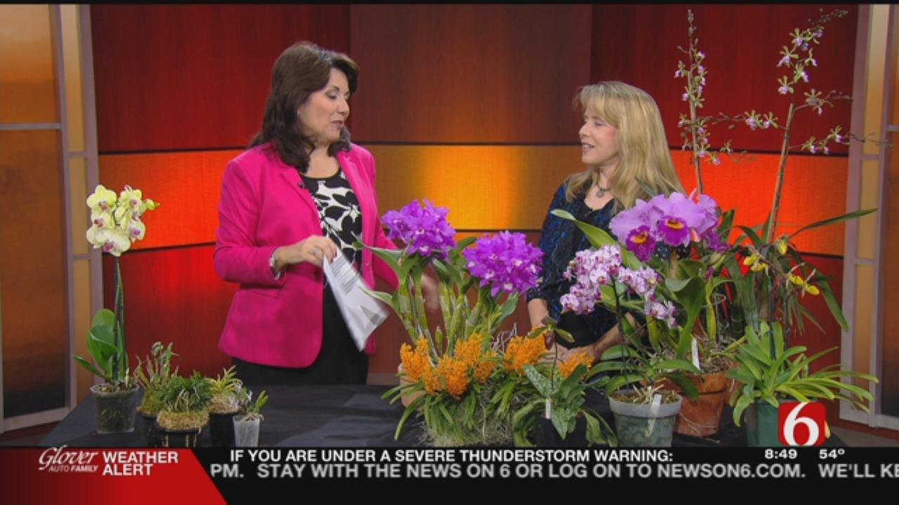 6 In The Morning Previews 'Orchids Around The Globe' In Tulsa