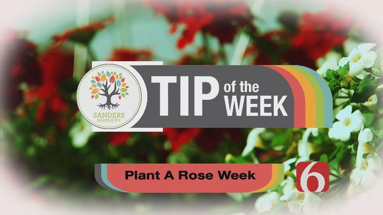 Tip of the Week 6