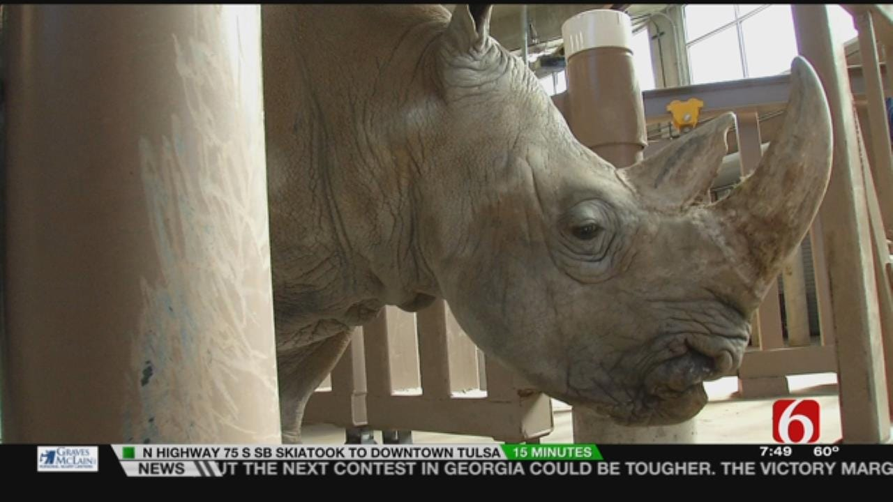 Wild Wednesday: How The Tulsa Zoo Weighs Its Rhinos