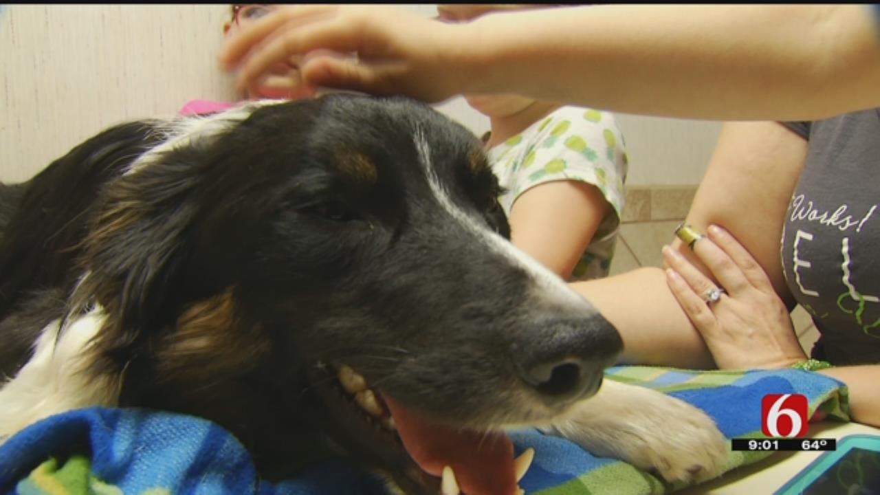 Creek County Army Veteran's Service Dog Recovering After Hit By Truck