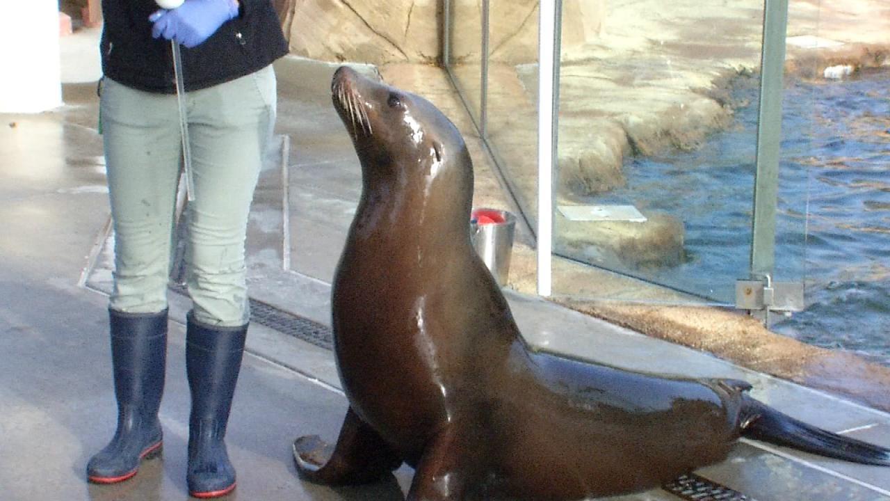 Wild Wednesday: Sea Lion Exhibit At The Tulsa Zoo