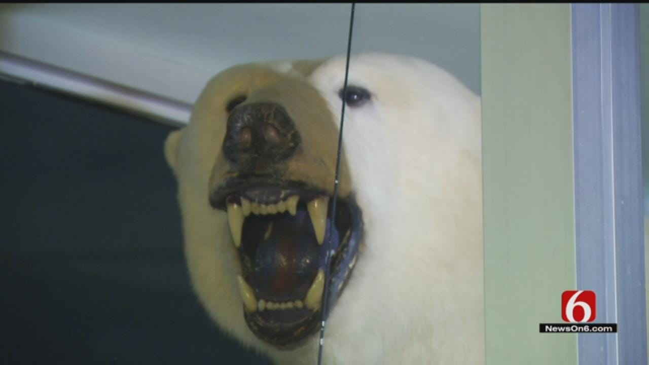 Rightful Owners Of Confiscated Polar Bear Share Its Storied History