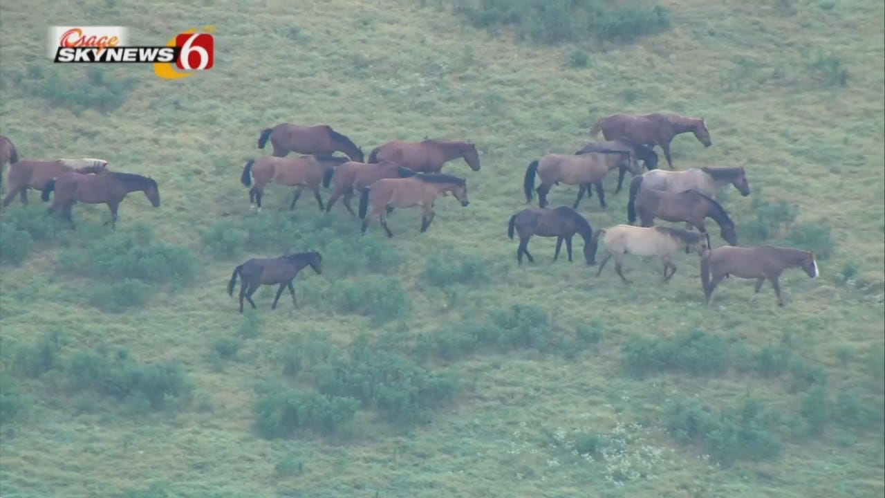 Osage SkyNew6 HD: Herd Of Horses Grazing Near Catoosa