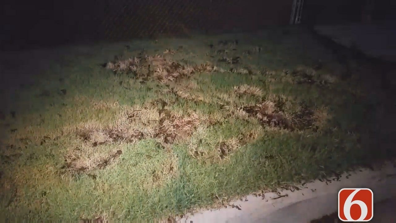 Dave Davis Reports On Damage Caused By Tulsa Storm Debris Removal