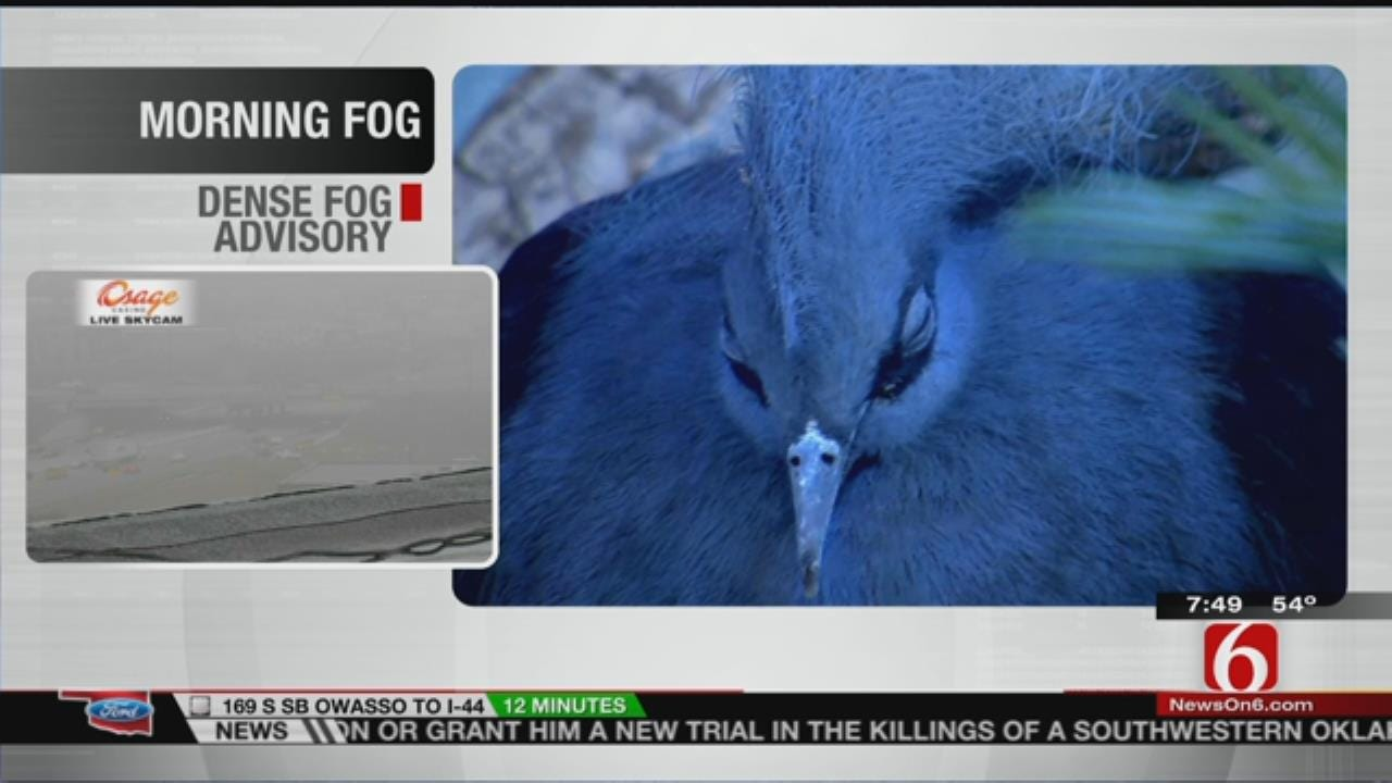 Wild Wednesday: Tulsa Zoo's Blue Crowned Pigeon