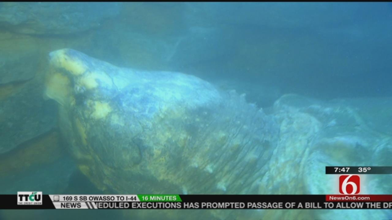 Wild Wednesday: Alligator Snapping Turtle At The Tulsa Zoo