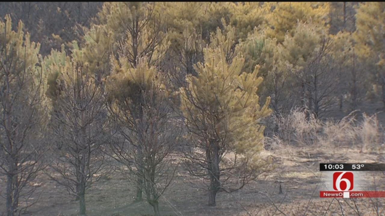 Grass Fire Burns Through Sand Springs Christmas Tree Farm