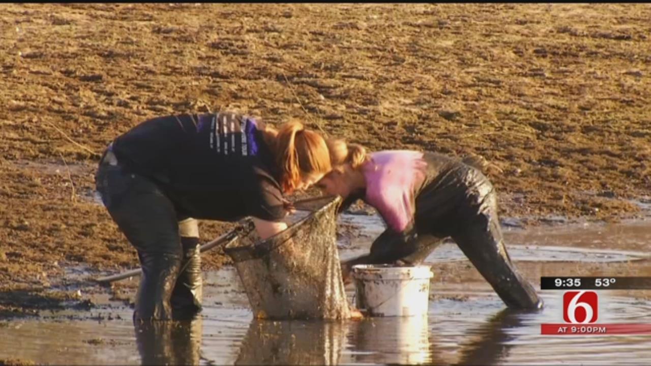 Draining Tulsa Pond Sparks Volunteer Fish, Turtle Rescue