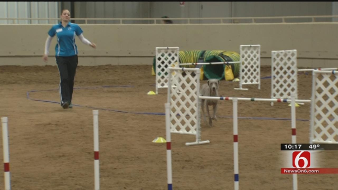 Dog Agility Trials Underway At Expo Square