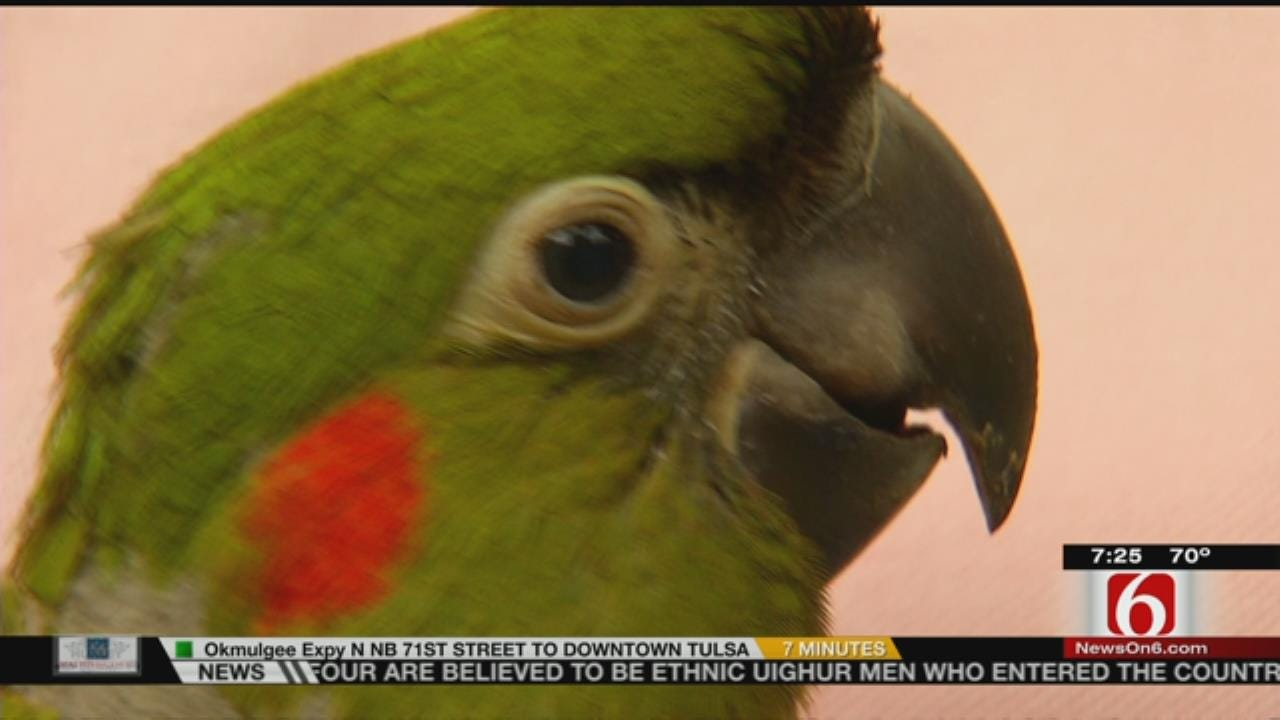 Wild Wednesday: Baby Macaws In The Rain Forest Exhibit At The Tulsa Zoo