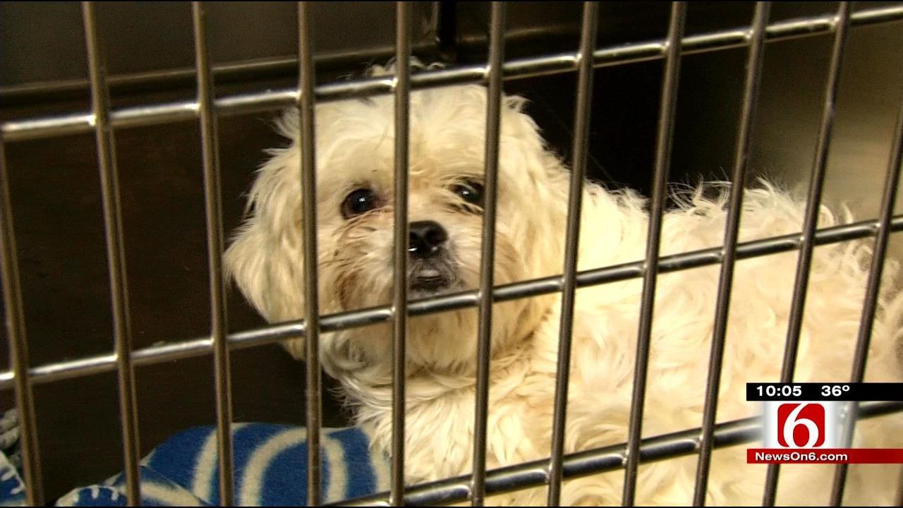 Tulsa Humane Society Hopes To Send Animals Home For Holidays
