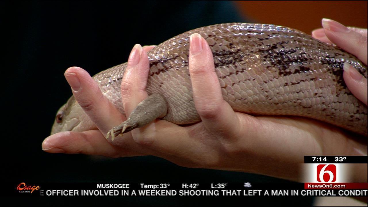 Wild Wednesday: Tulsa Zoo's Skink Lizard