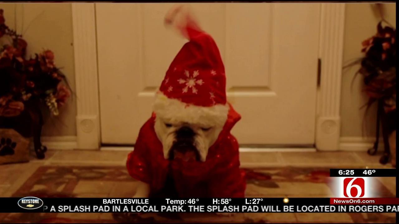 Tulsa Bulldog Gets In The Holiday Spirit