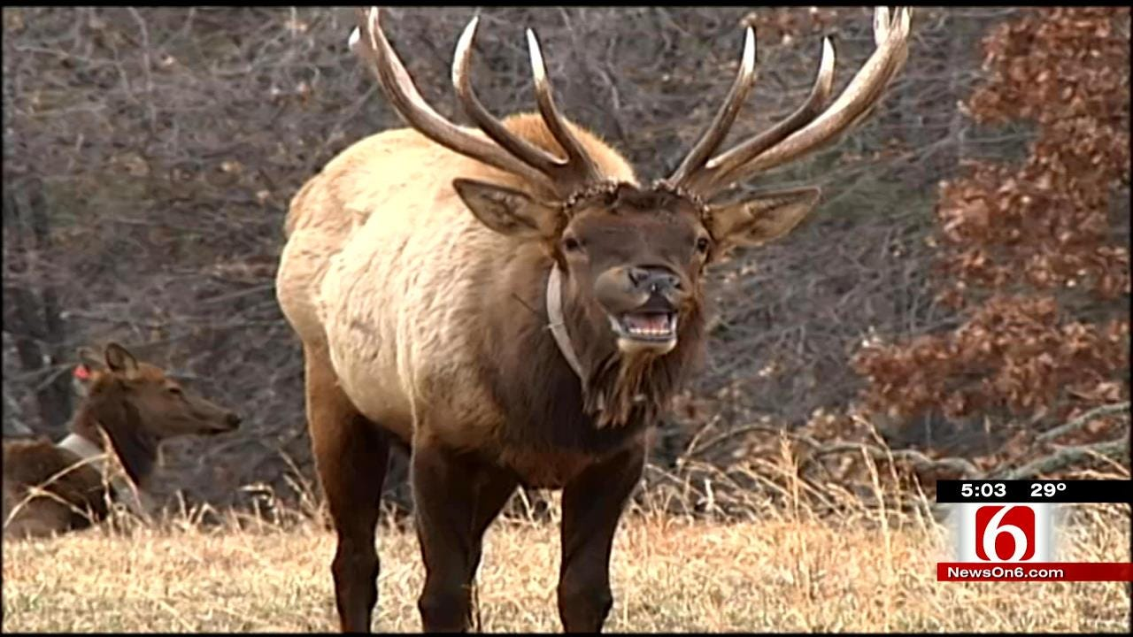 Oklahoma Game Wardens Using Facebook To Crack Down On Poachers