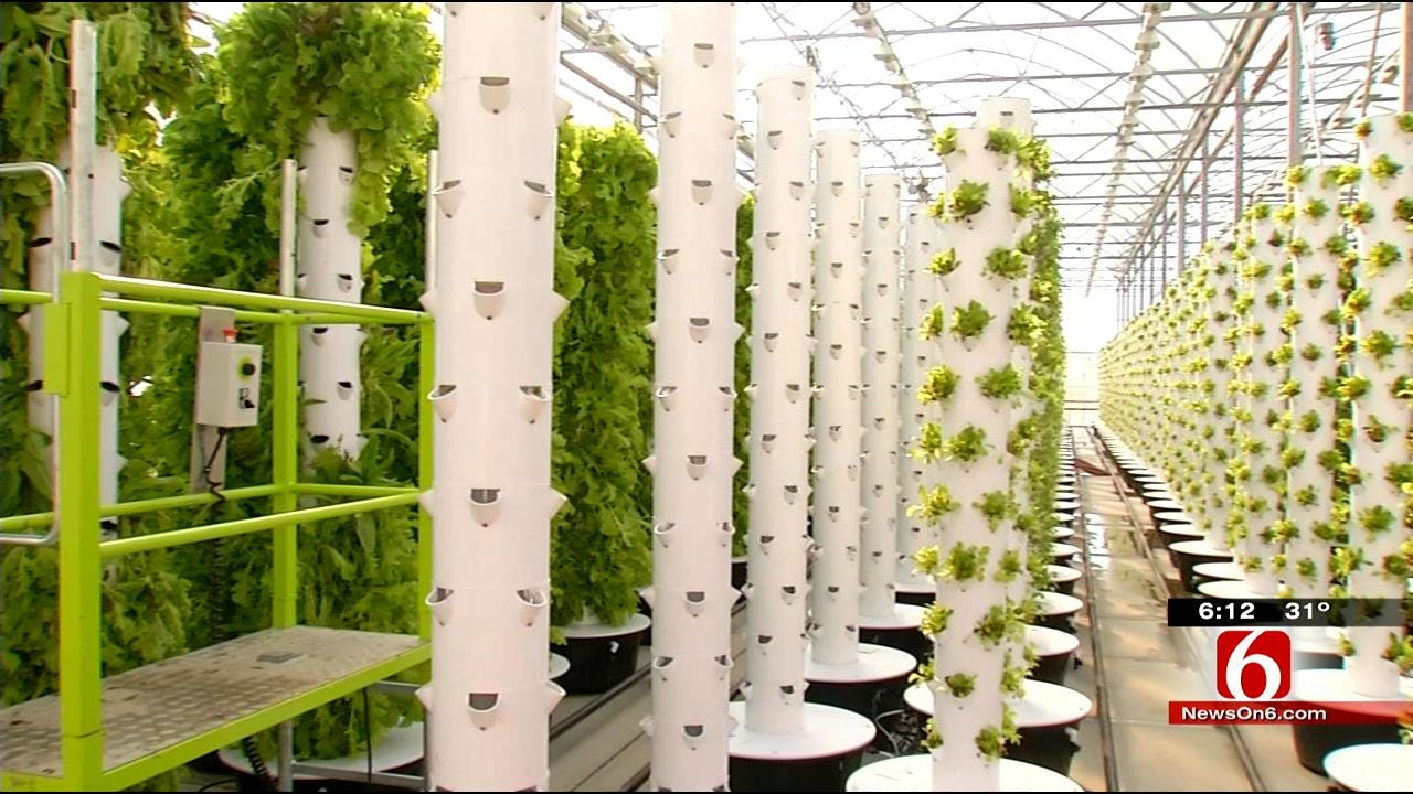 Green County Farmers Use New System To Grow Plants All Year