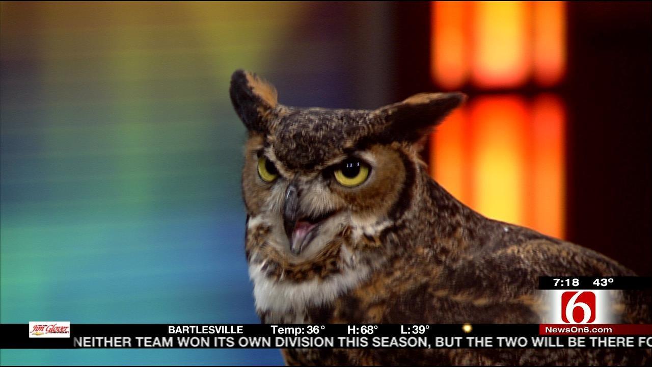 Wild Wednesday: Great Horned Owl